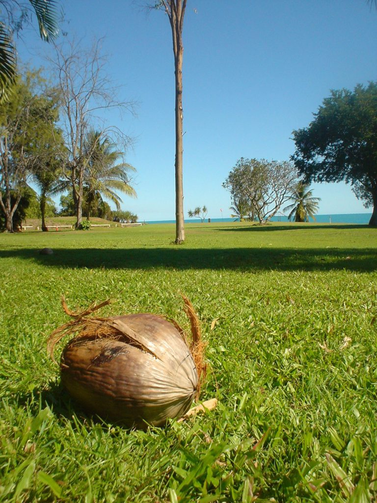 coconut-on-the-golf-course-1565571