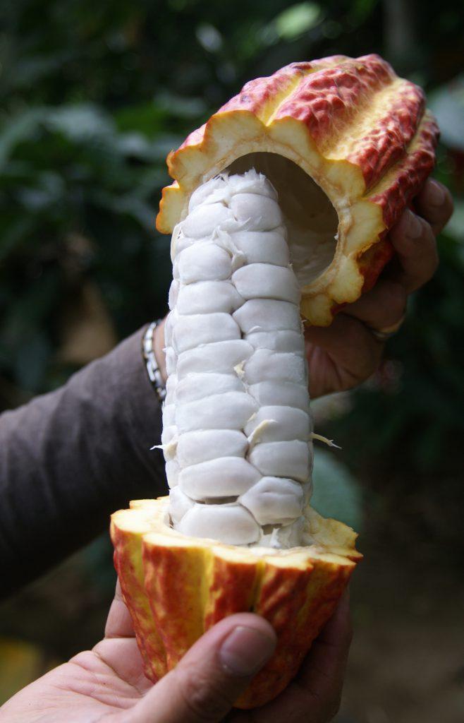 cocoa-1322031